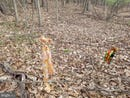 Lot 28 ANDERSON RIDGE RD, WARDENSVILLE, WV 26851
