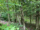 Lot 3 Black Bear Trail, Davis, WV 26260