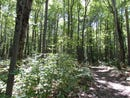 Park Trail 4.5 ACRES, Indian River, MI 49749