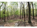 20.08ac MOSSY OAKS ROAD, YELLOW SPRING, WV 26865