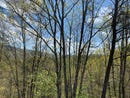 Lot 6 Quail Way, Overlook, Caldwell, WV 24925