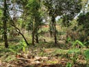Great piece of land in Limón, Limon, Limon