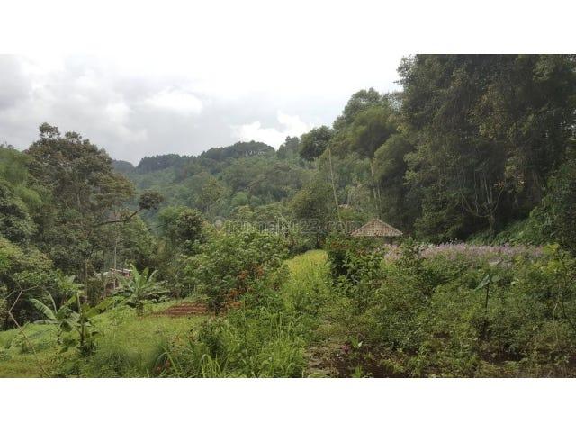 Jl  LBC no  888, Tapos, Ciawi, Cileungsi, Ciawi, Bogor, West